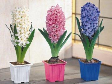 Полив и подкормка цветов