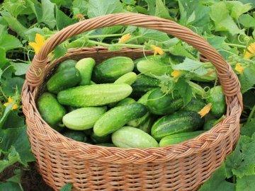 Сорта для выращивания