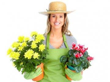 Чем лечить растение