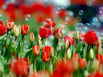 Как красиво оформить цветник