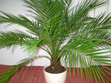 Правила по посадке и уходу за растением