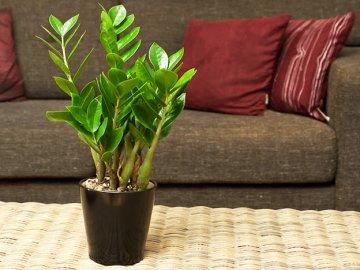 Правила ухода за экзотическим растением