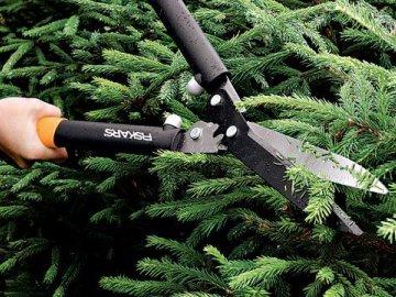 Рекомендации по уходу за деревцами