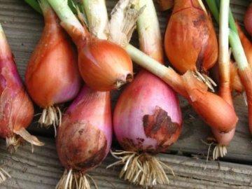 Уборка урожая и способы хранения