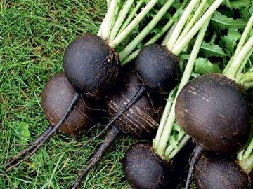 Особенности выращивания и ухода за овощем