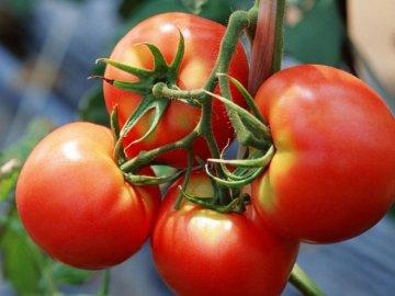 Уход за томатами Багира