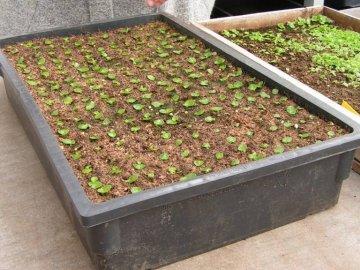 Как размножаются растения?