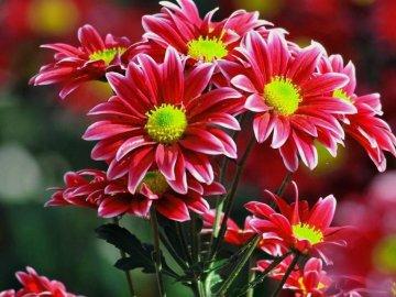 Правила срезки цветов для букета