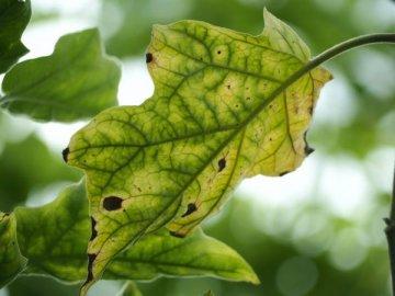 Возможные проблемы при выращивании