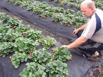 Рекомендации по уходу за ягодой