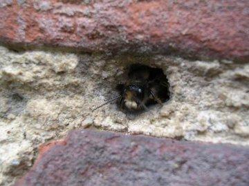 Как вывести ос из стен дома?