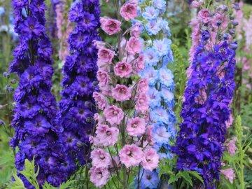 Условия выращивания красавца