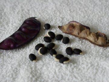 Размножение растения и посадка на рассаду