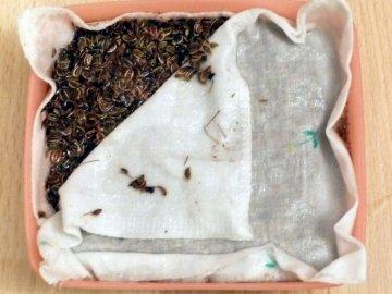 Проращивание семян в домашних условиях
