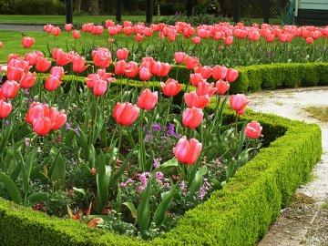 Советы по оформлению цветочных клумб с многолетниками
