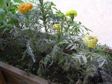 Возможные недуги цветов
