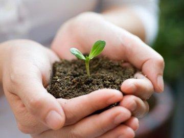 Как правильно подготовить почву