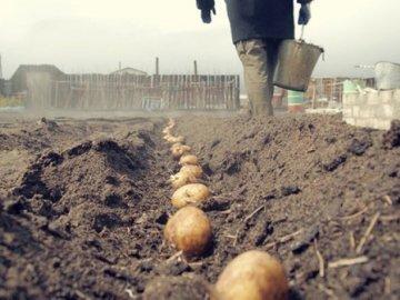 Подготока почвы, клубней и посадка