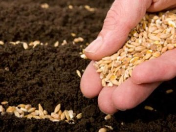 Особенности подготовки семян