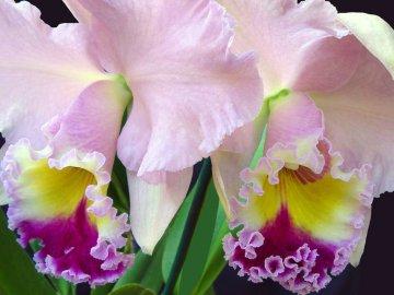 Орхидеи нужно затенять