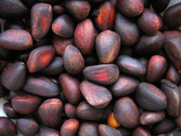 Как прорастить кедровый орех