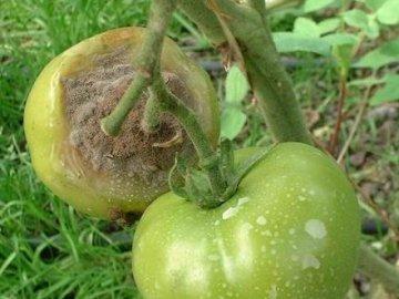 Чем опрыскивать помидоры