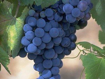 Виноград это ягода или фрукт