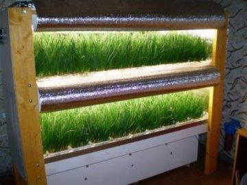 Выращивание лука в подвале