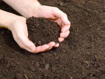 почва для помидоров