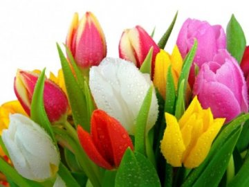 как дольше сохранить тюльпаны