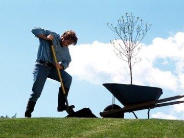 как правильно посадить яблоню