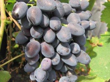 виноград чарли