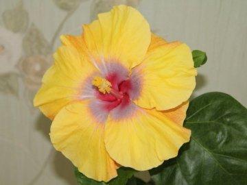 Цветы дом уход за розой