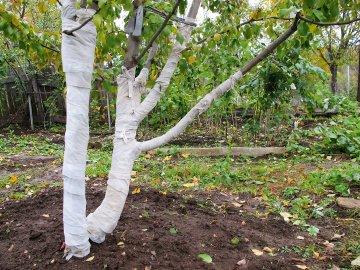 Применение садового бинта