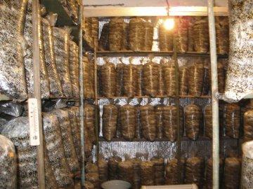 Помещение для выращивания грибов
