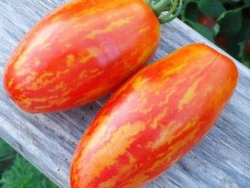 Спелые томаты Искры пламени