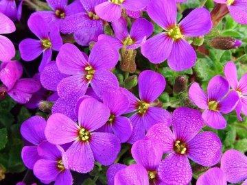 Цветки обриеты крупным планом