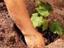 Особенности весенней посадки винограда саженцами