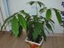 Выращивание в домашних условиях