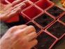 Особенности посадки рассады дыни