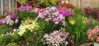 Засухоустойчивые цветы