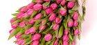 розовые тюльпаны на фото