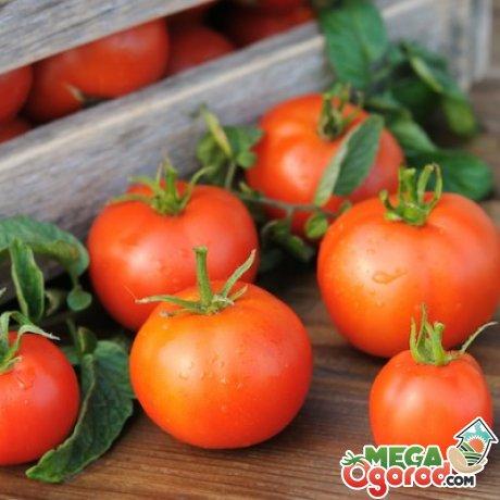 Как правильно выбрать, заготавливать и хранить томаты