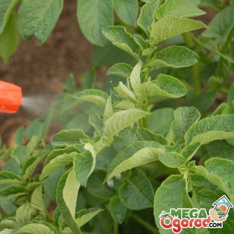 Использование креолина на огороде