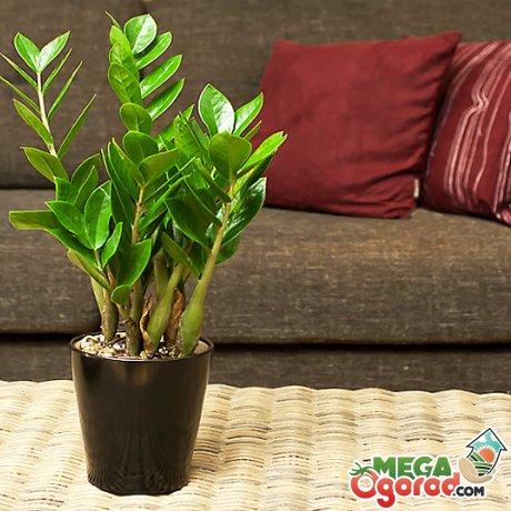 Как избавить растение от вредителей?