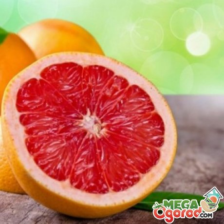 Выращивание грейпфрута дома из косточки