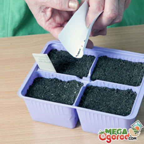 Семена растения - подготовка и посадка