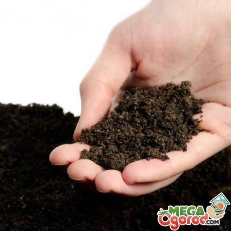 Подготовка почвы, семян и сроки посадки