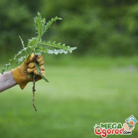 Популярные методы борьбы с сорняками на огороде