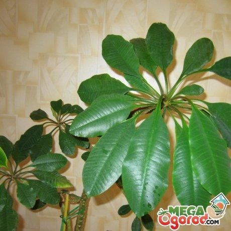 Уход за комнатным растением